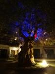 Detalle de uno de los árboles de los apartamento Cas Saboner