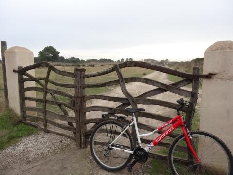 Ruta en bicicleta por la albufera