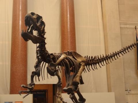 Entrada del Museo de Historia Natural.