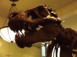 Tiranosaurius Rex en el Museo de Historia Natural de NY