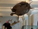 Animales del Museo de Historia Natural de NY
