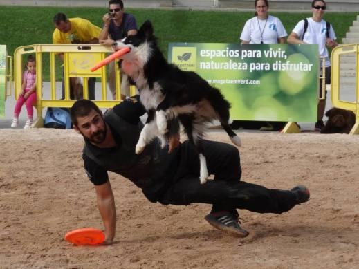 paco lobo en animal party